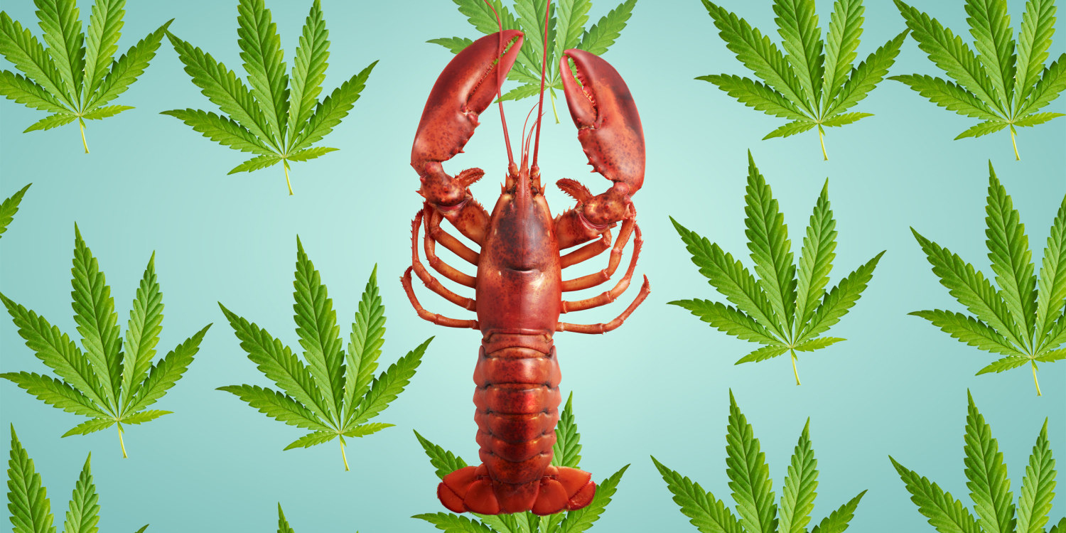 Lobster with Cannabis